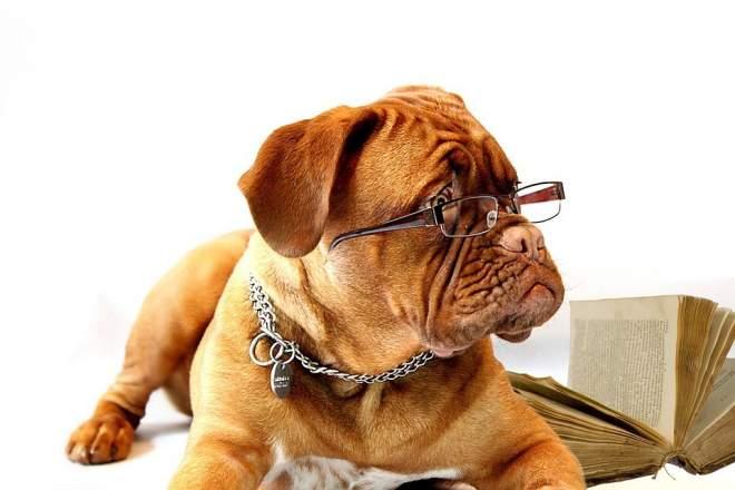参考書と犬