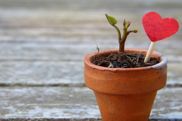 「植木とハート」のイメージ