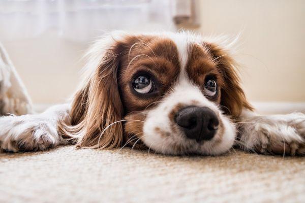 犬が見上げる写真